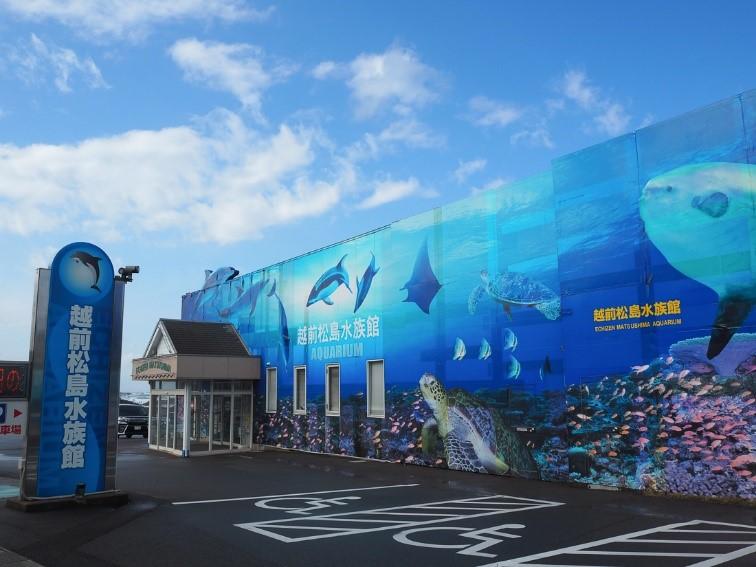 越前松島水族館は希少昆虫「シャープゲンゴロウモドキ」の展示を始めました。